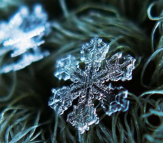 snowflake525